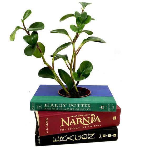 Fantasy Book Planter