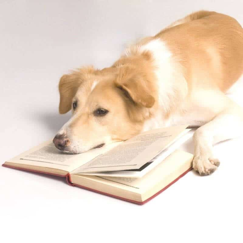 Dog laying on a book